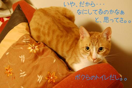 DSC_0059_20100509222244.jpg