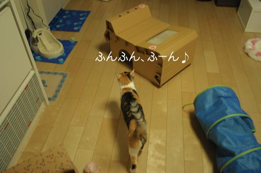 DSC_0075_20100218225211.jpg