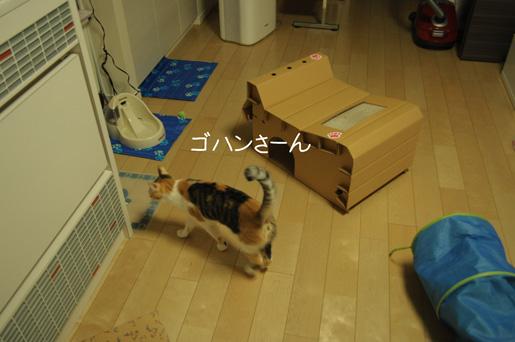 DSC_0077_20100218225211.jpg