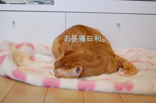 DSC_0078_20100316002905.jpg