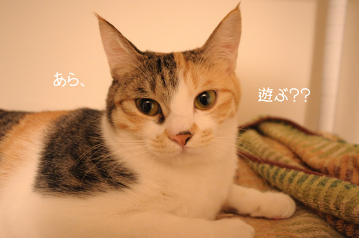 DSC_0107_20100127012449.jpg