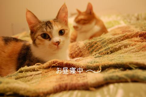 DSC_0289_20100125221649.jpg