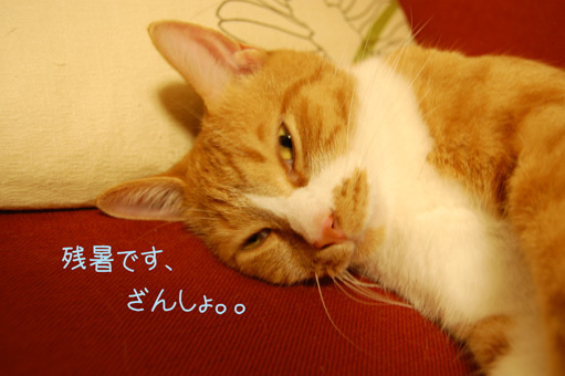 DSC_0418_20100813004325.jpg