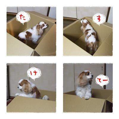 cats_20091121231955.jpg