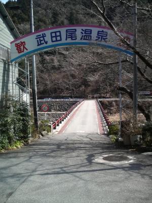 shitami (6)