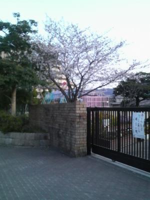 sakura20110405 (2)
