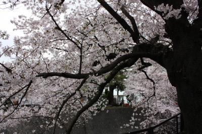 sakura2011 (5)