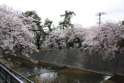 sakura2011 (3)