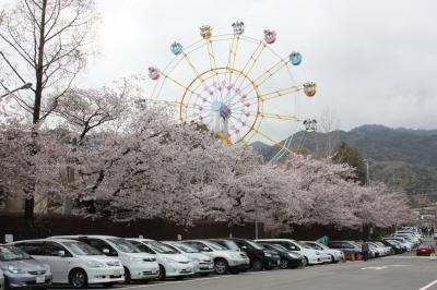 sakura2011 (21)