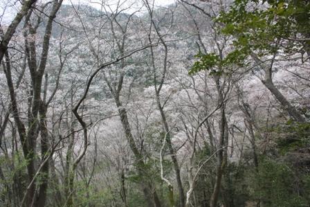 takedao20110416 (36)