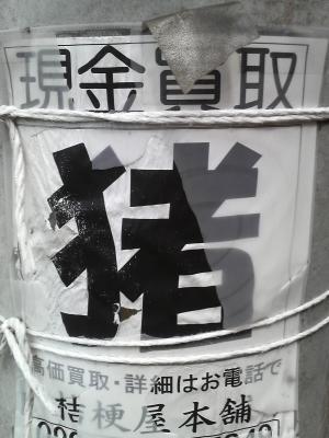 shitami.jpg