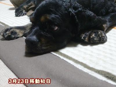 2012_0324_102712-CIMG9469.jpg