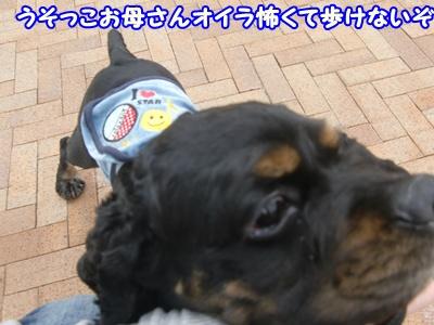 2012_0328_104951-CIMG9828.jpg