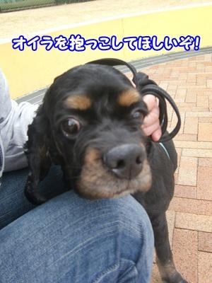 2012_0328_104958-CIMG9829.jpg