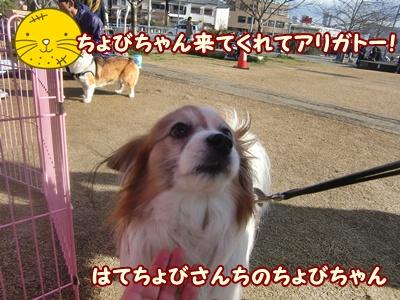CIMG0145_20120401222245.jpg