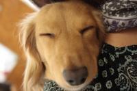 おやすみモモちゃん…