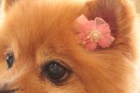 ひまわりに咲く桜って、なんか難しい日本語だ