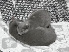 鏡もち猫1