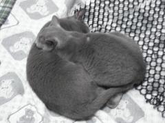 鏡もち猫2