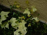 2011_0408_093516-P1120891_convert_20110408094454.jpg