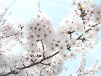 2011_0410_110717-P1120900_convert_20110410151641.jpg