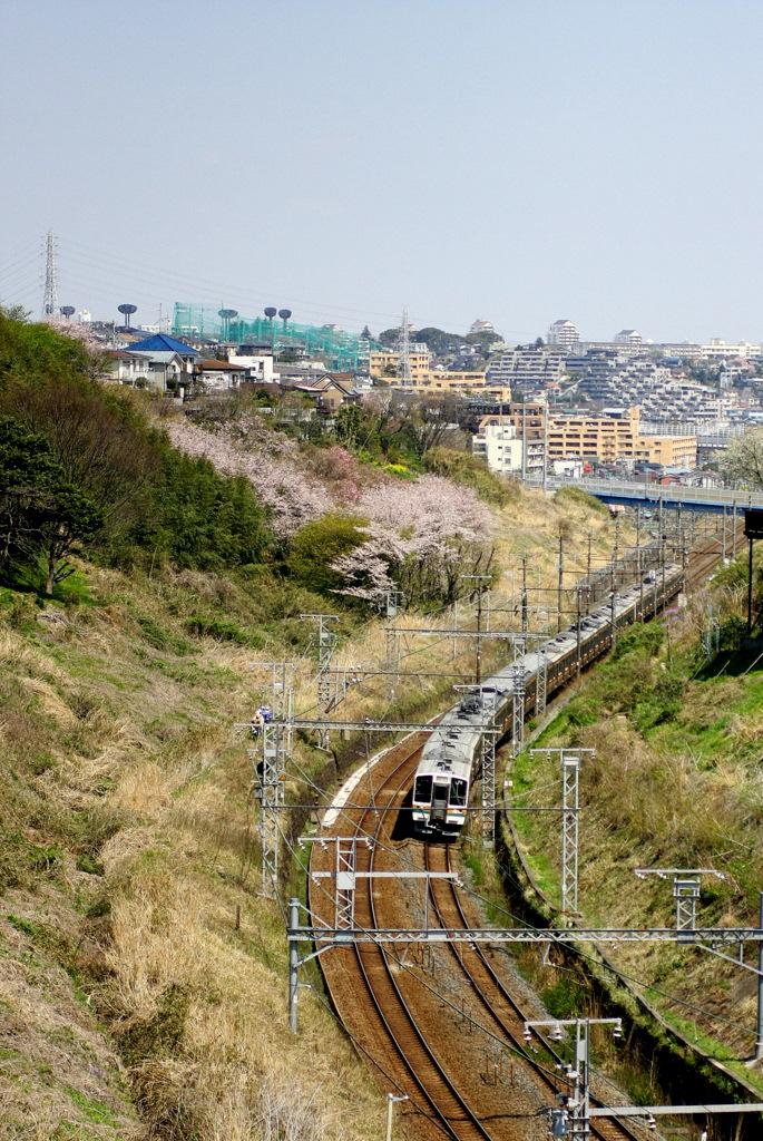 IMG_0260-sakura.jpg