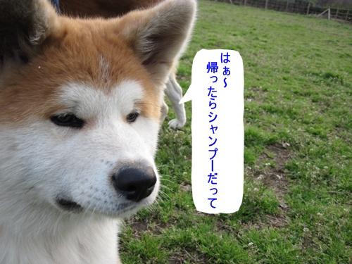 IMG_7027ちび太君アップ
