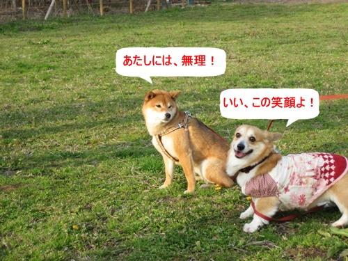 IMG_6998リュラとさくらちゃん