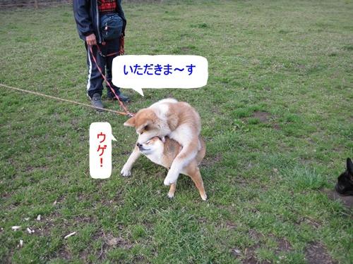 IMG_7016チビ太君とさくらちゃん