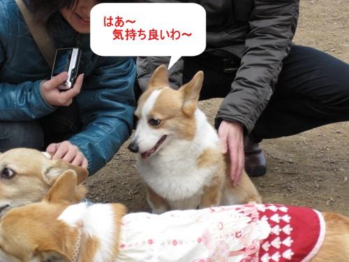 IMG_7325チコちゃん