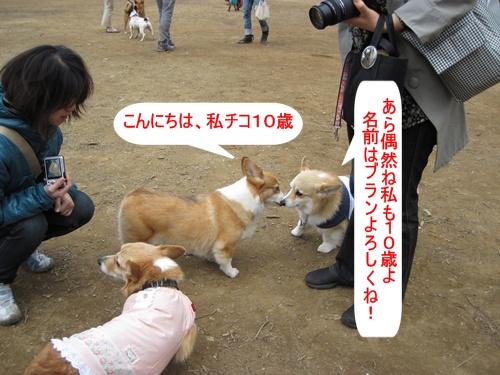 IMG_7321チコちゃん