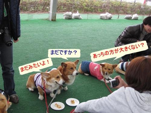 IMG_8017ポン太&ラナちゃん&ぎんちゃん