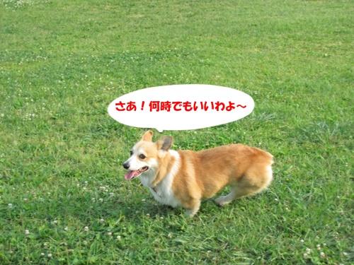 IMG_0919 6_11広場