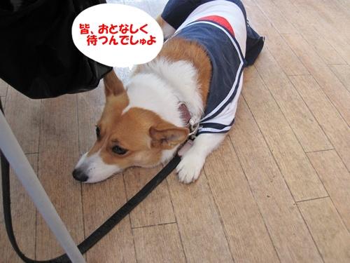 IMG_1412WINちゃん