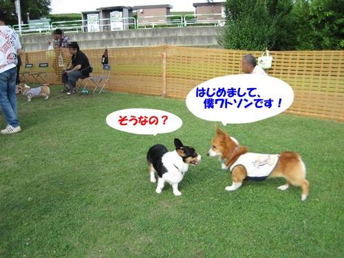 IMG_1519うるみちゃん・ワトソン君