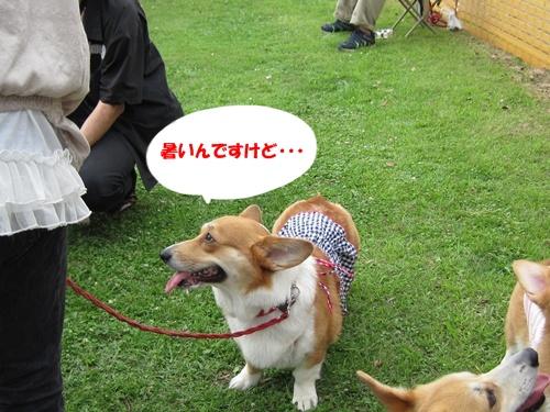 IMG_1473ラナちゃん