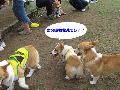 IMG_1474アース君・かるびちゃん