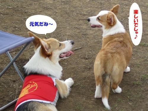 IMG_1465プリン君・あこちゃん