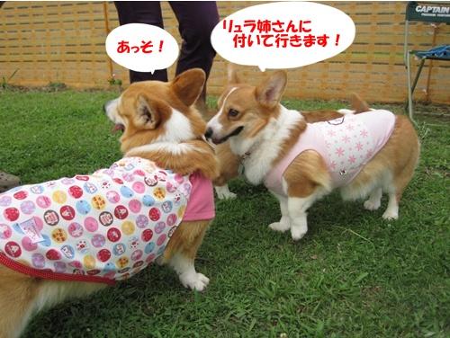 IMG_1450ラムネちゃん