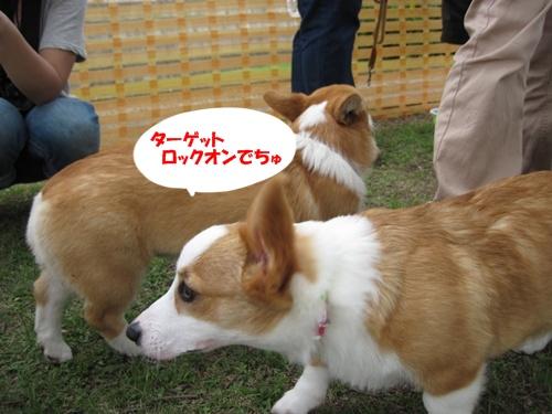 IMG_1453あこちゃん・あずきちゃん