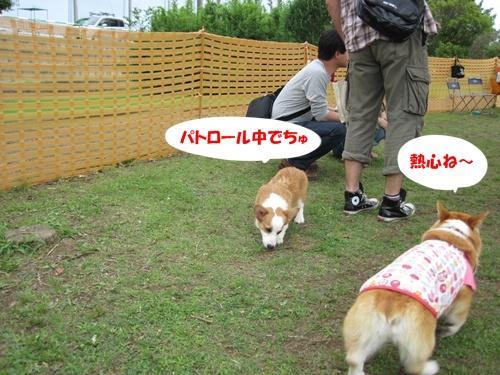 IMG_1446あこちゃん