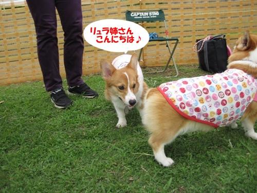 IMG_1445ラムネちゃん