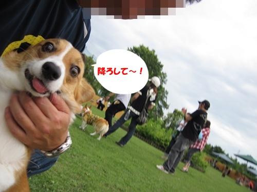 IMG_1440小春ちゃん