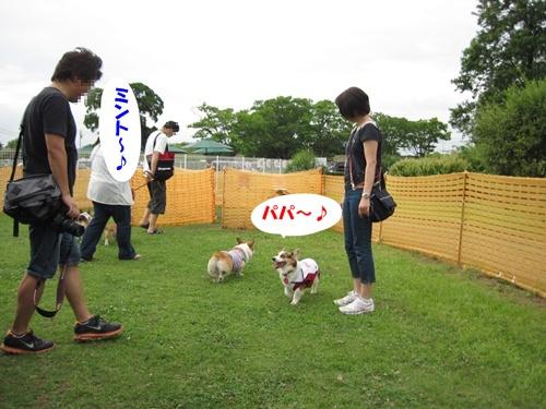 IMG_1613ミントちゃん・ミュウちゃん