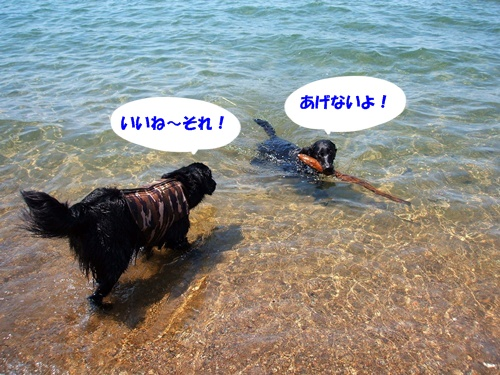 DSCF0757猪苗代湖