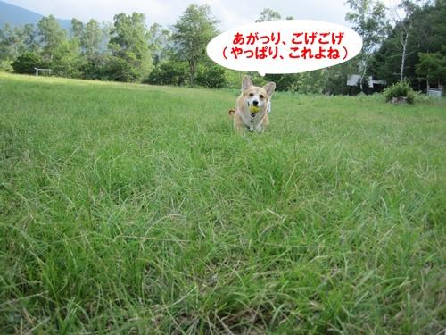 が-IMG_3132