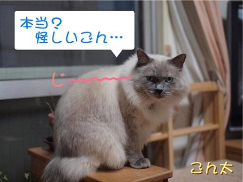 ごんた (6)