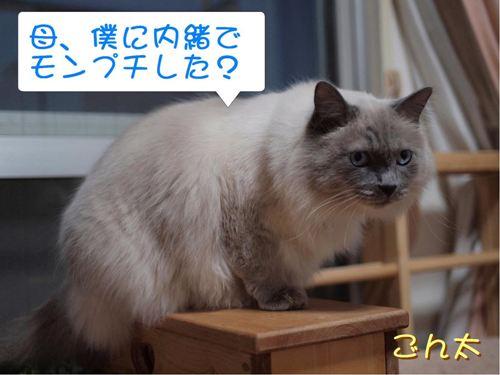 ごんた (4)
