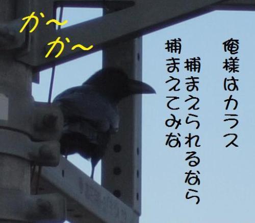 からす (2)