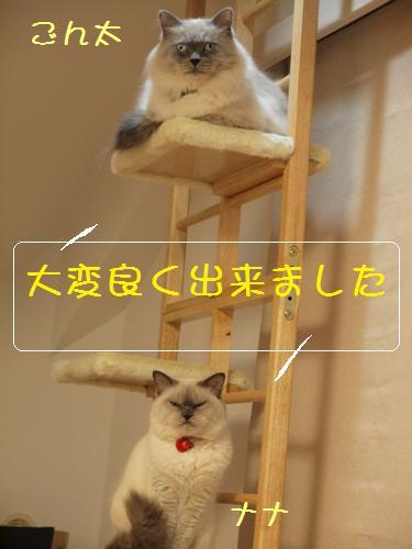 猫タワー1